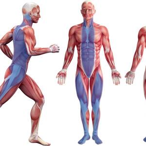 運動連鎖と症状(コラム)