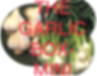 CSA Garlic Box Mini photo.jpg