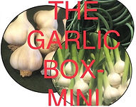 CSA Garlic Box Mini photo.jpg