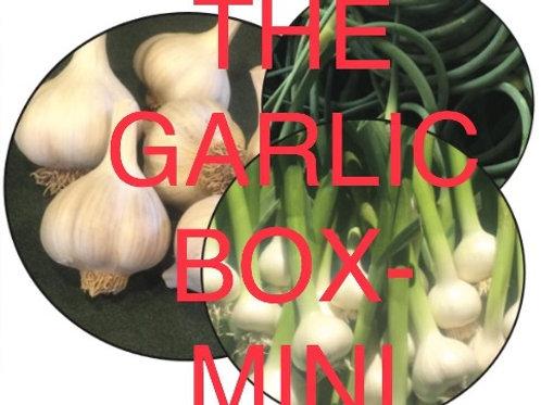 The Garlic Box Mini - CSA 1/2 Share