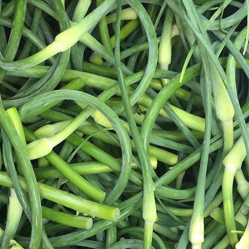 Garlic Scapes / Priced per lb
