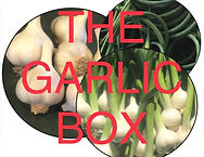 CSA Garlic Box Full Size.jpg