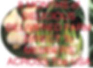 CSA Full box photo.jpg