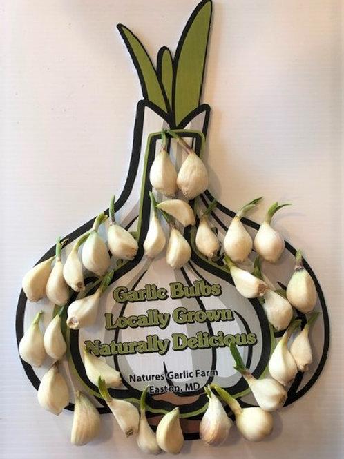 30 Sprouting Hardneck Garlic Cloves