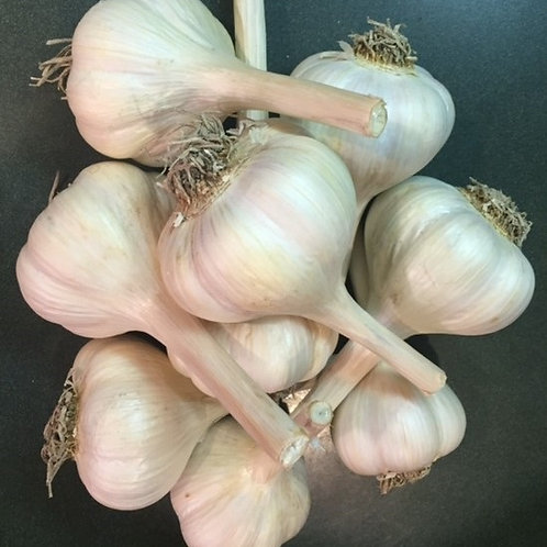 Music Garlic Bulbs / Priced per lb