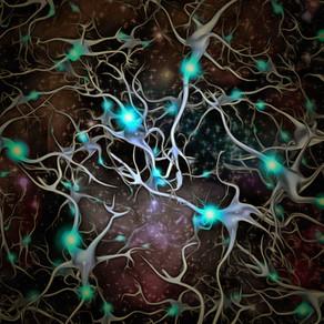 Kā smadzenēs tiek saglabāta plasticitāte?