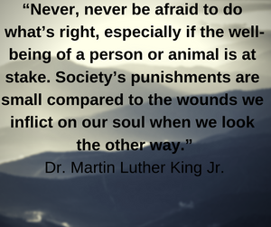 Dr. Martin Luther King Quotes