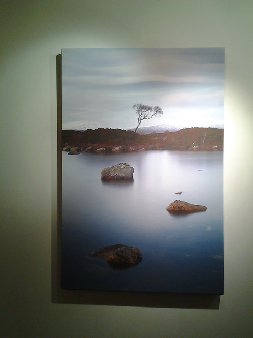Lilac Island