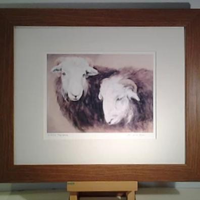 Herdwick Tup Lambs