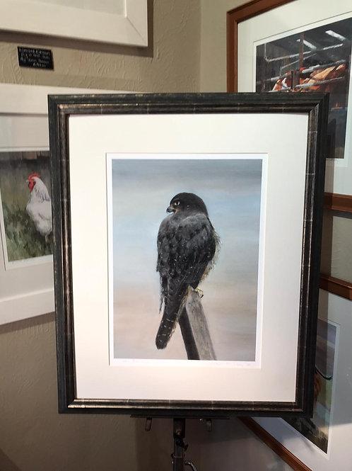1/50 New Zealand Falcon