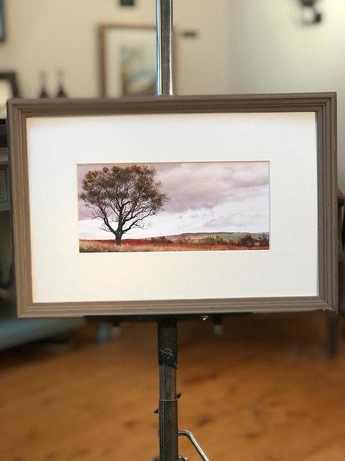 Moorland Birch