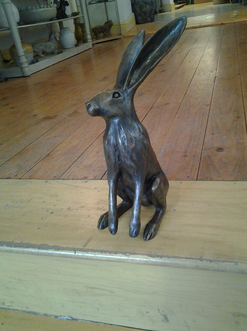 : Startled Hare