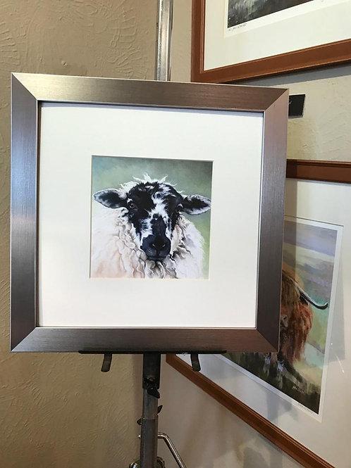 Sheep Portrait IV