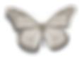 Papillon Blanc.png