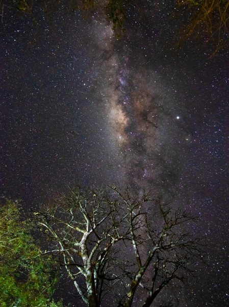 The Milky Way lighting up the night skies of Zambia