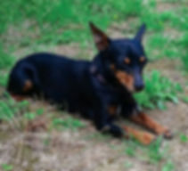 chien viterbe 2.jpg