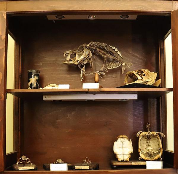 scheletri-pesci.jpg