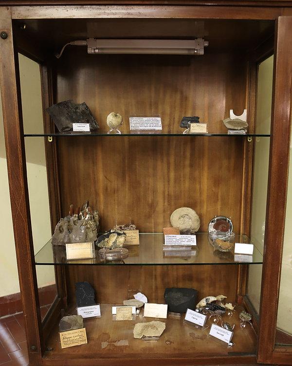Armadio-fossili---invertebrati.jpg