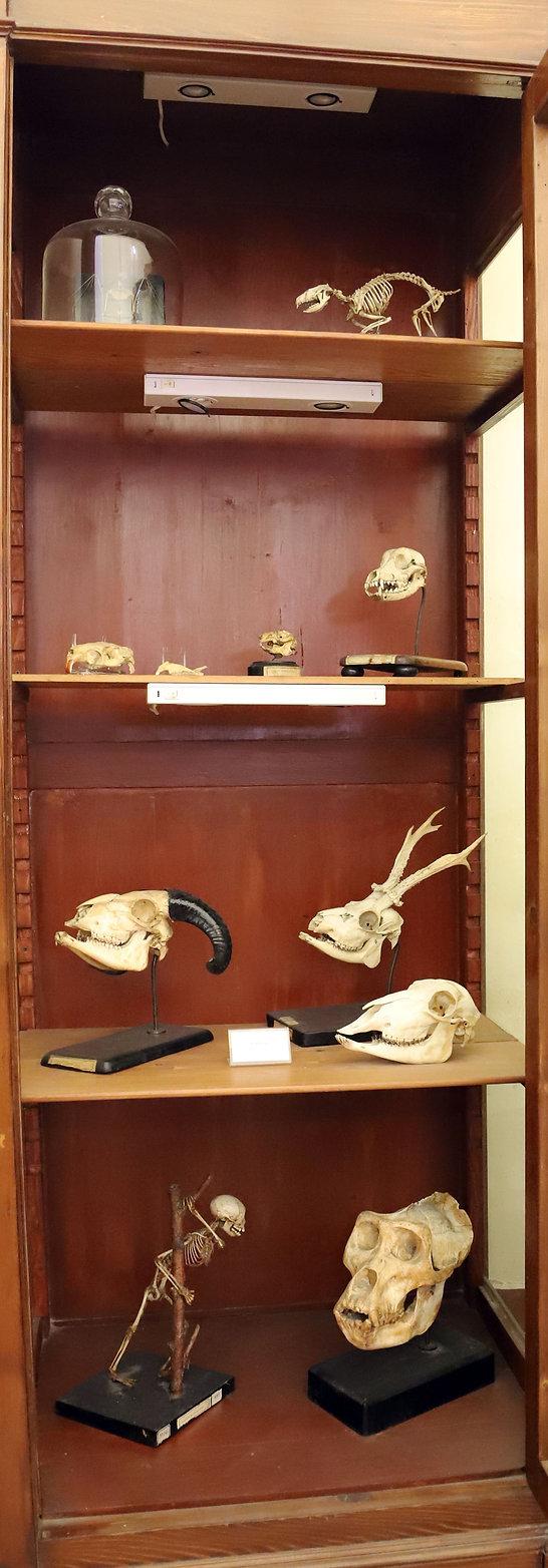scheletri-mammiferi.jpg