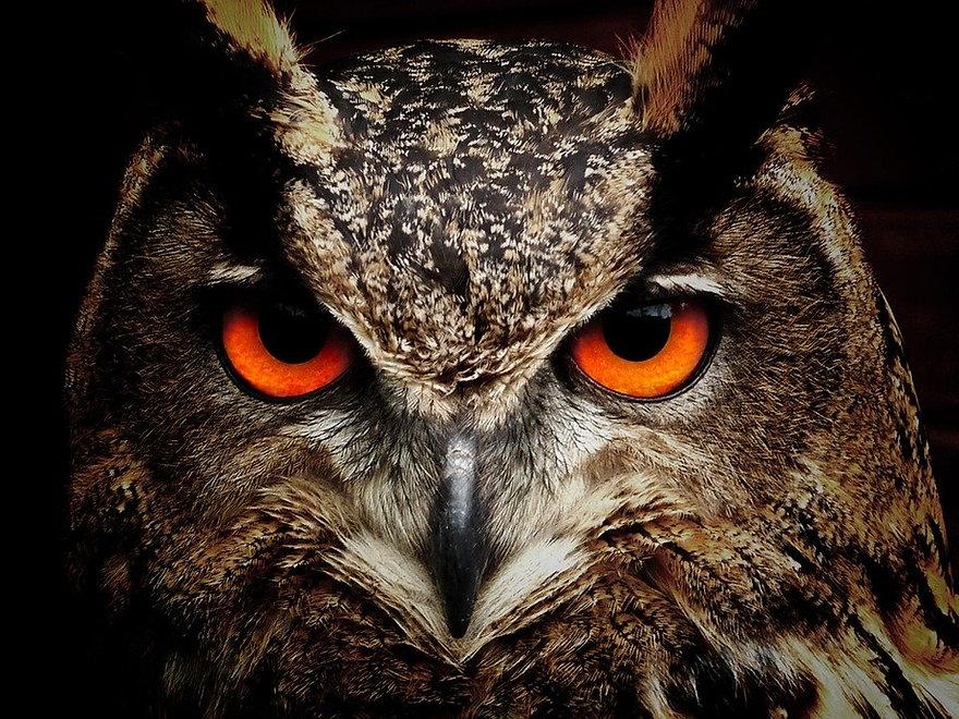 owl-50267_960_720.jpg