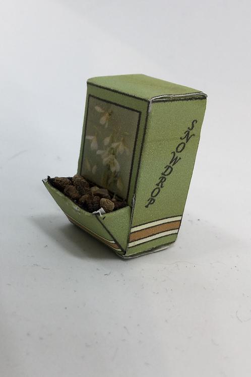 Seed Box - Snowdrop