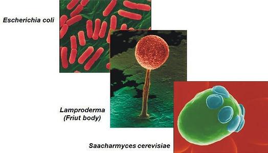 bioreactor sample microorganisms