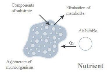 Microorganism aeration oxygen transfer