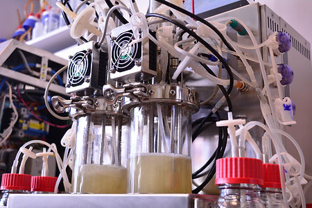 1l liter lab bioreactor