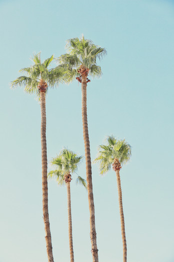 Palm Cluster