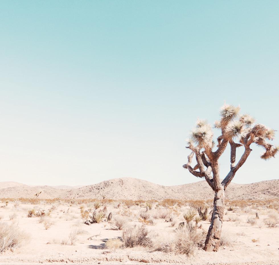 Desert Lonely Tree