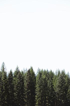Simple Evergreens