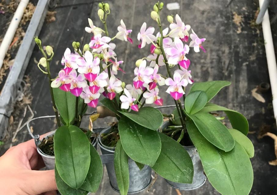 Orchids online