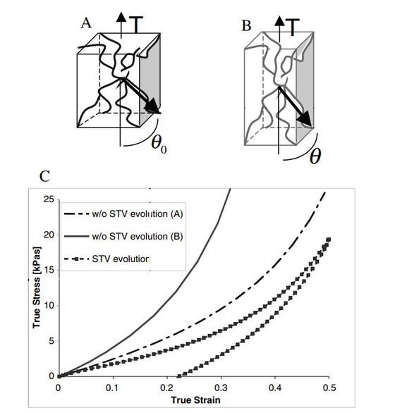 Characterization and modeling of growth and remodeling in tendon and soft tissue constructs