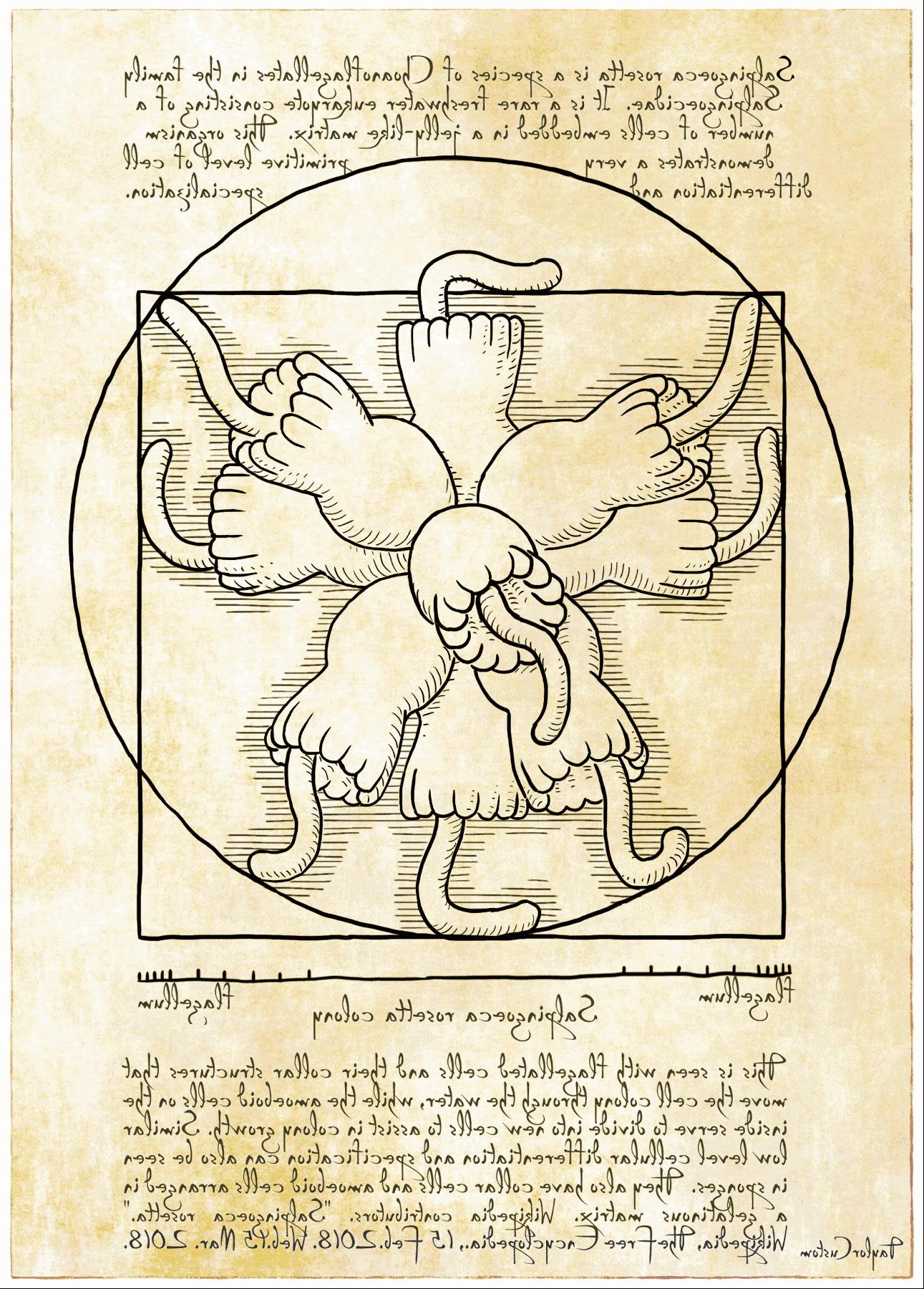 renniassance-rosette-v02