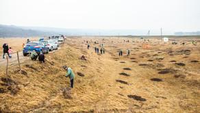 Voluntarii Hai Moldova și Million Trees Moldova plantează o pădure de peste 12 mii de copaci în zona
