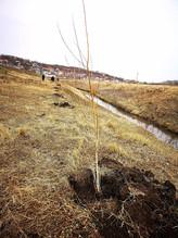 Voluntarii Hai Moldova și Million Trees Moldova vor împăduri zona râului Ichel. Plantările vor avea