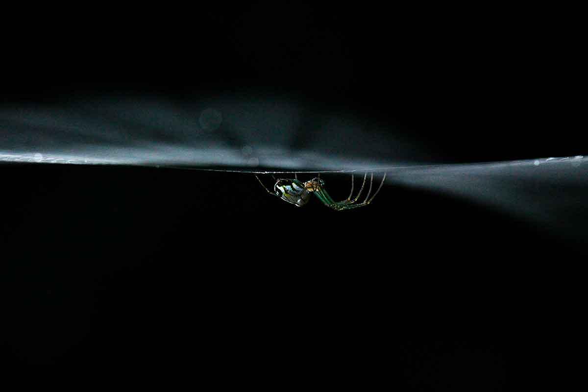 natureza-aranha