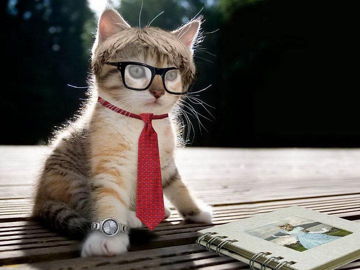 Boy cat.jpg