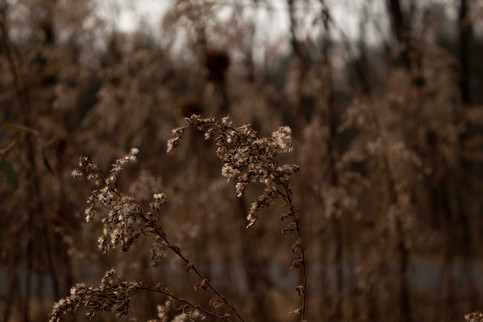 Depth Of Field Photography