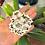 Thumbnail: Bless your heart // sticker+magnet pack