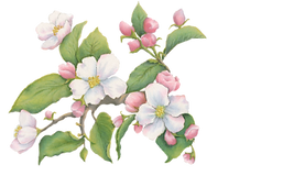 Apple Blossom Small Section.png