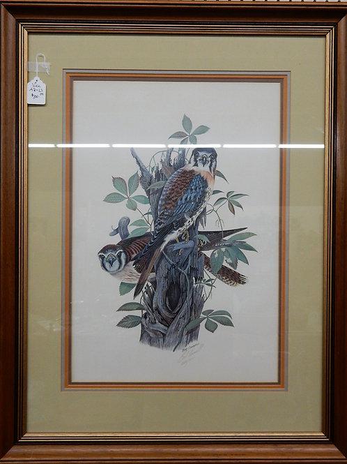 Falcon Print by Bob Connell