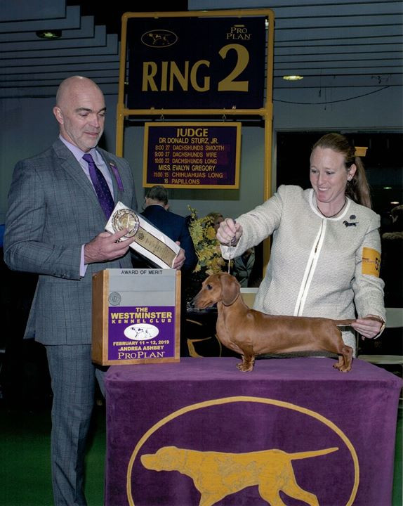 Our girl does well at Westminster 2019!