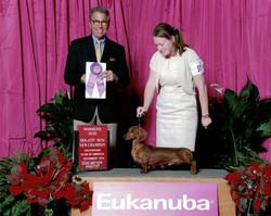 Eukanuba WD new CH Lincoln