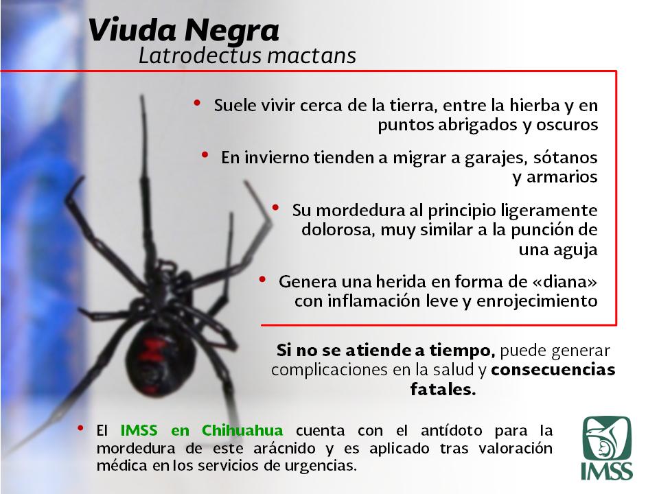 Resultado de imagen para alerta por araña violinista frio