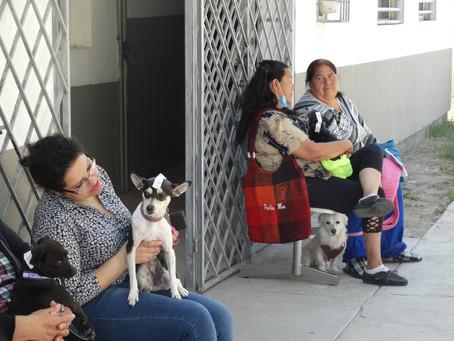 Invitan a vacunar sin costo a perros y gatos contra la rabia en el estado