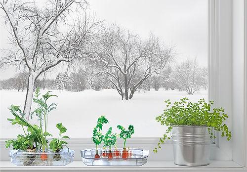 Winter Windowsill.jpg