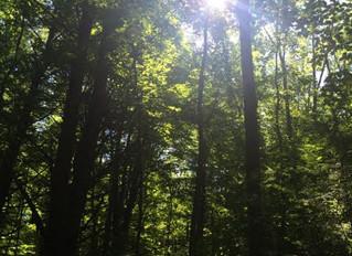 Summertime: The Season of Pitta