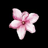 Magnolia-1.png