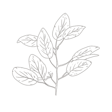 Handdrawn-Leaf-27.png